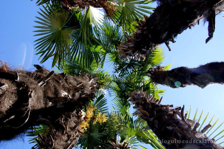 palmieri in stresa