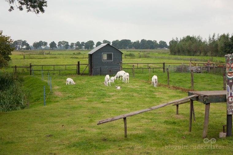marginea satului giethoorn