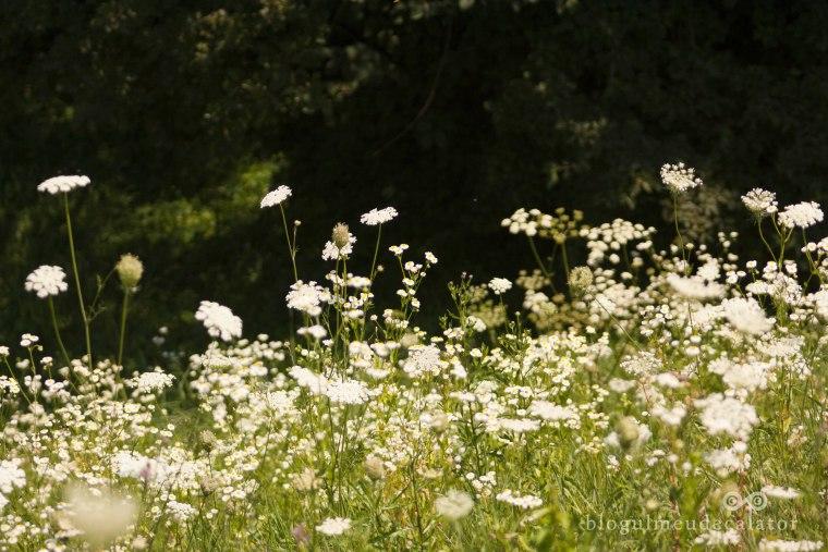 camp de flori sibiu