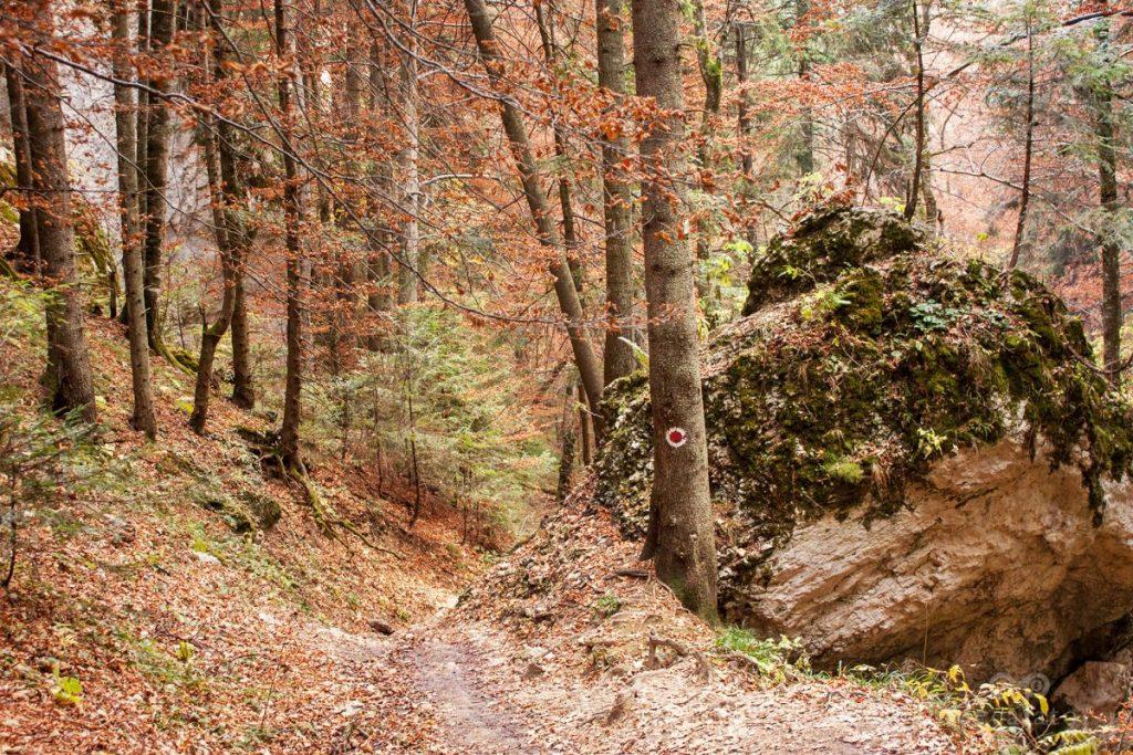 Traseu spre Canionul 7 Scari