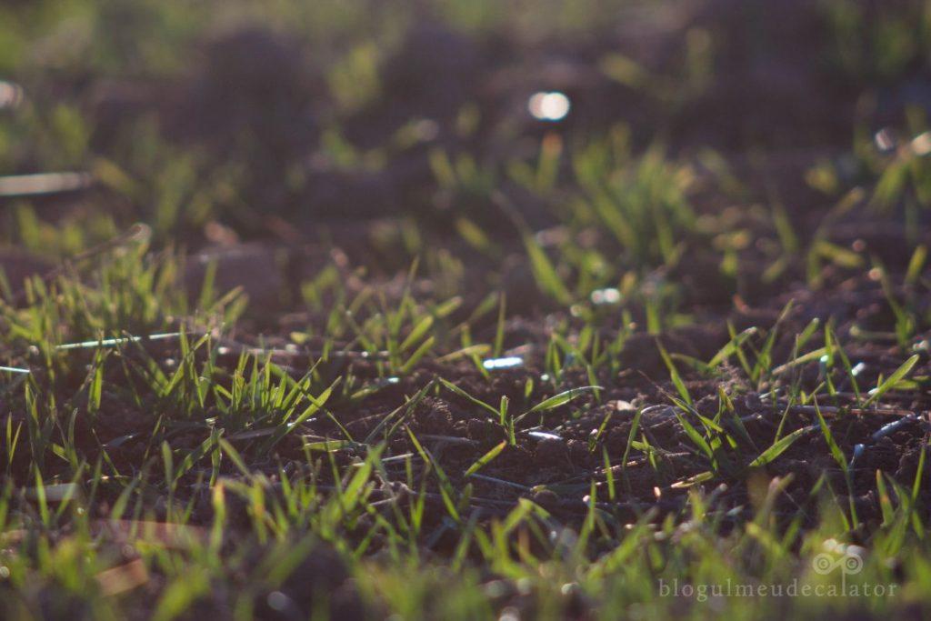 drumeție la cascada urlatoarea - iarba proaspata