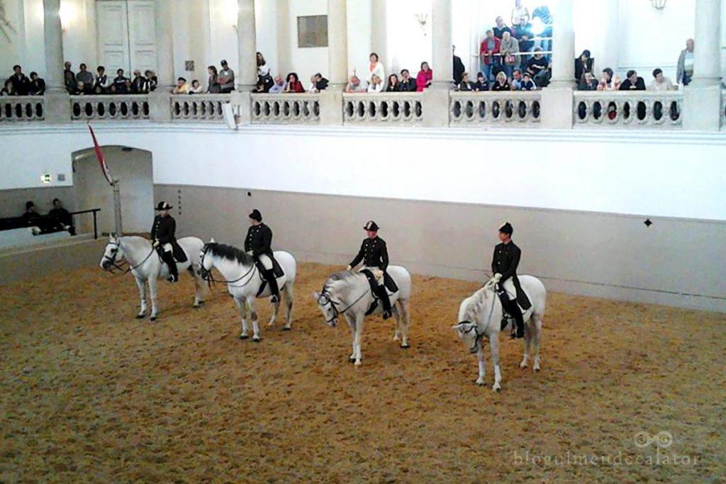 repetitia de dimineata la scoala de calarie de la hofburg