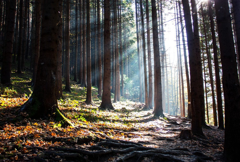 4 trasee montane pentru începători