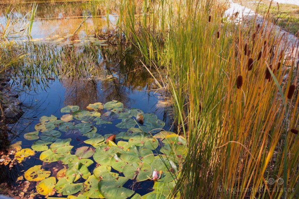 lacul-cu stuf-din-curtea-castelului-kalnoky