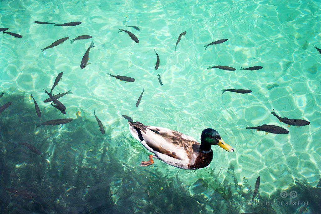 rata si pesti in lacurile PLitvice