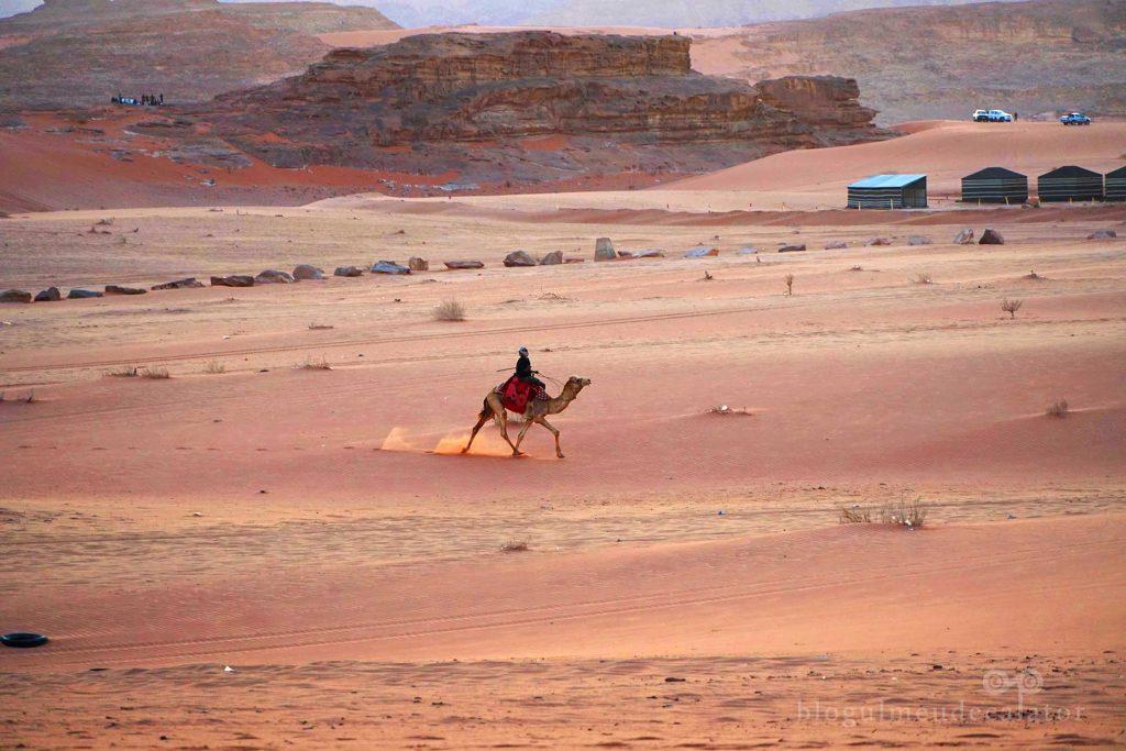 camila în Deșertul wadi Rum