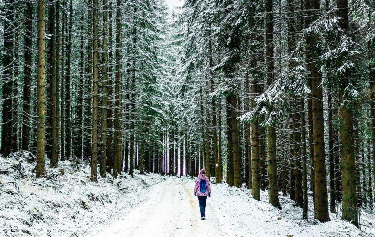 Traseu Moeciu de Sus-Poiana Andolia pe timp de iarna