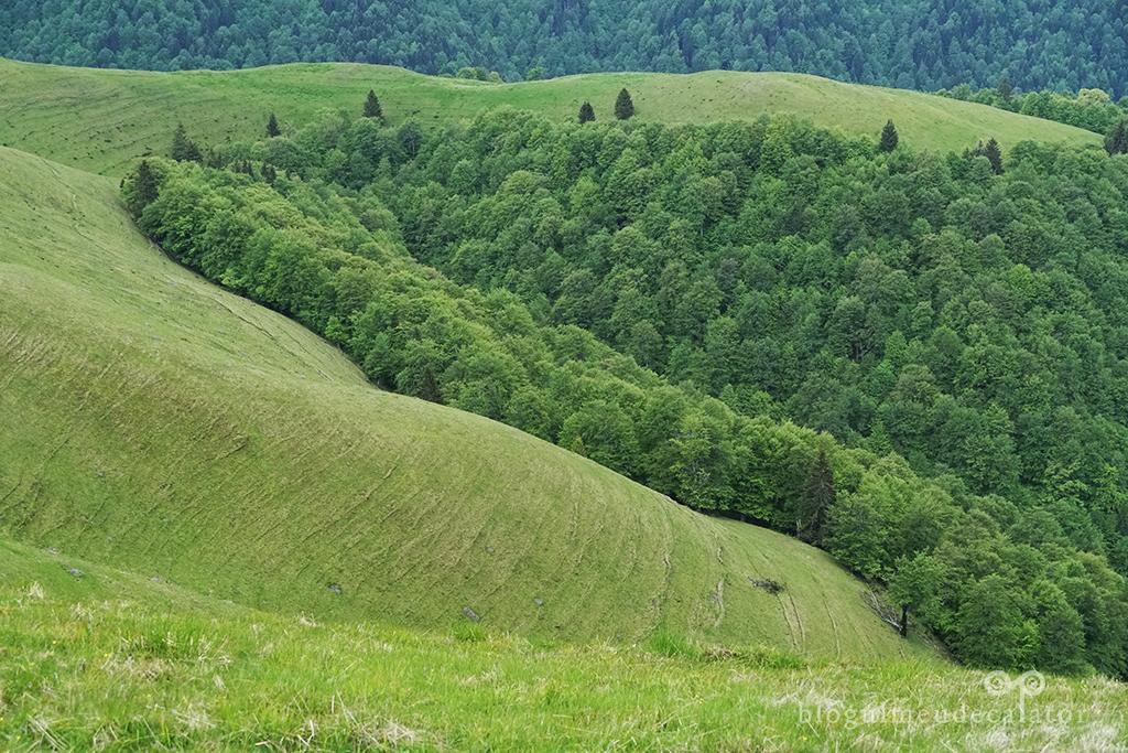 Munții Baiului. Traseu telegondola Azuga - Vf. Baiul Mare și retur