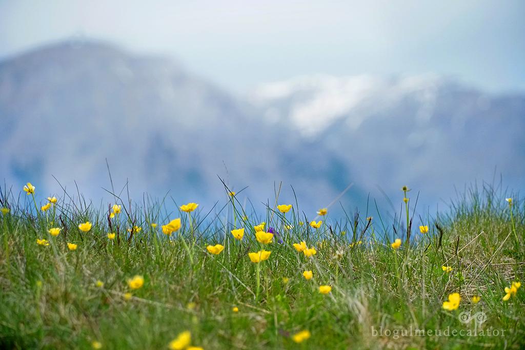 flori in Muntii Baiului