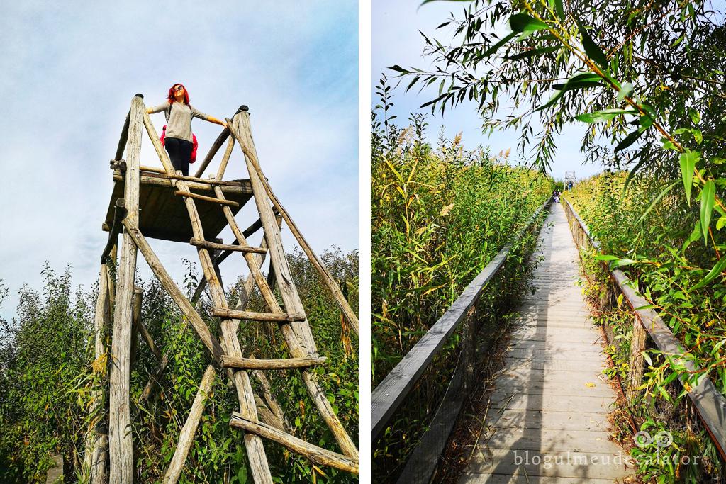 observatorul ornitologic din parcul Comana