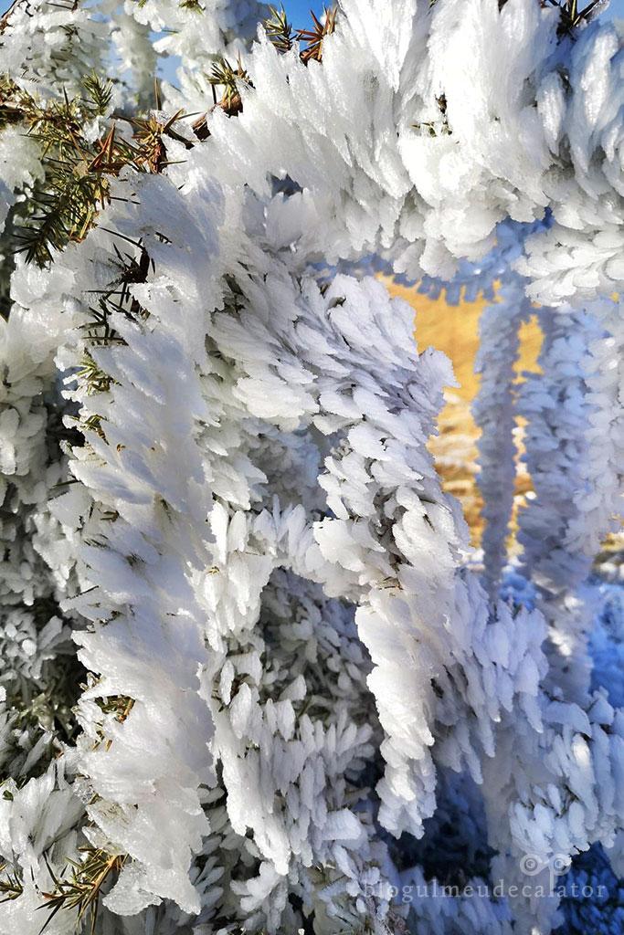 flori de gheata pe trasul ecoturistic Fundata