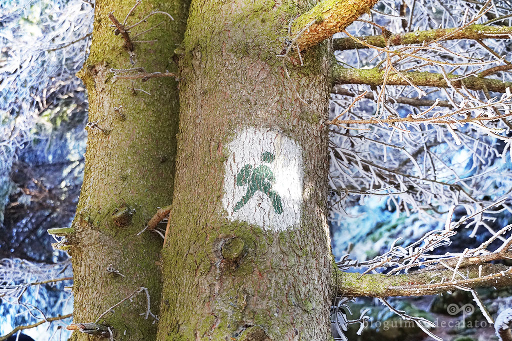 traseu ecoturistic Fundata-omulet verde