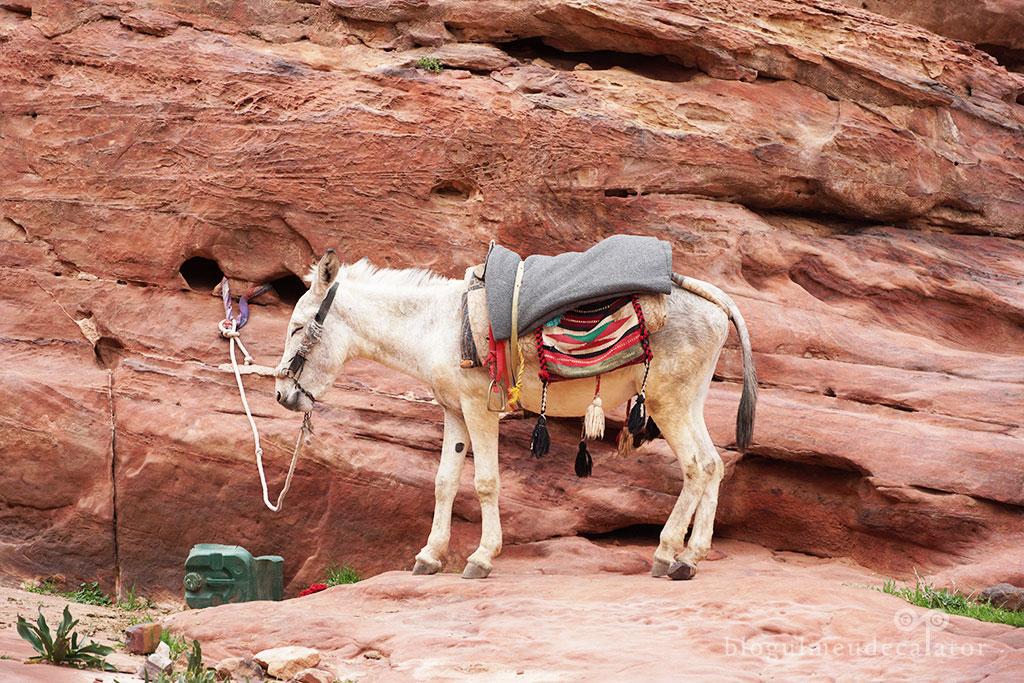 magarus la Petra